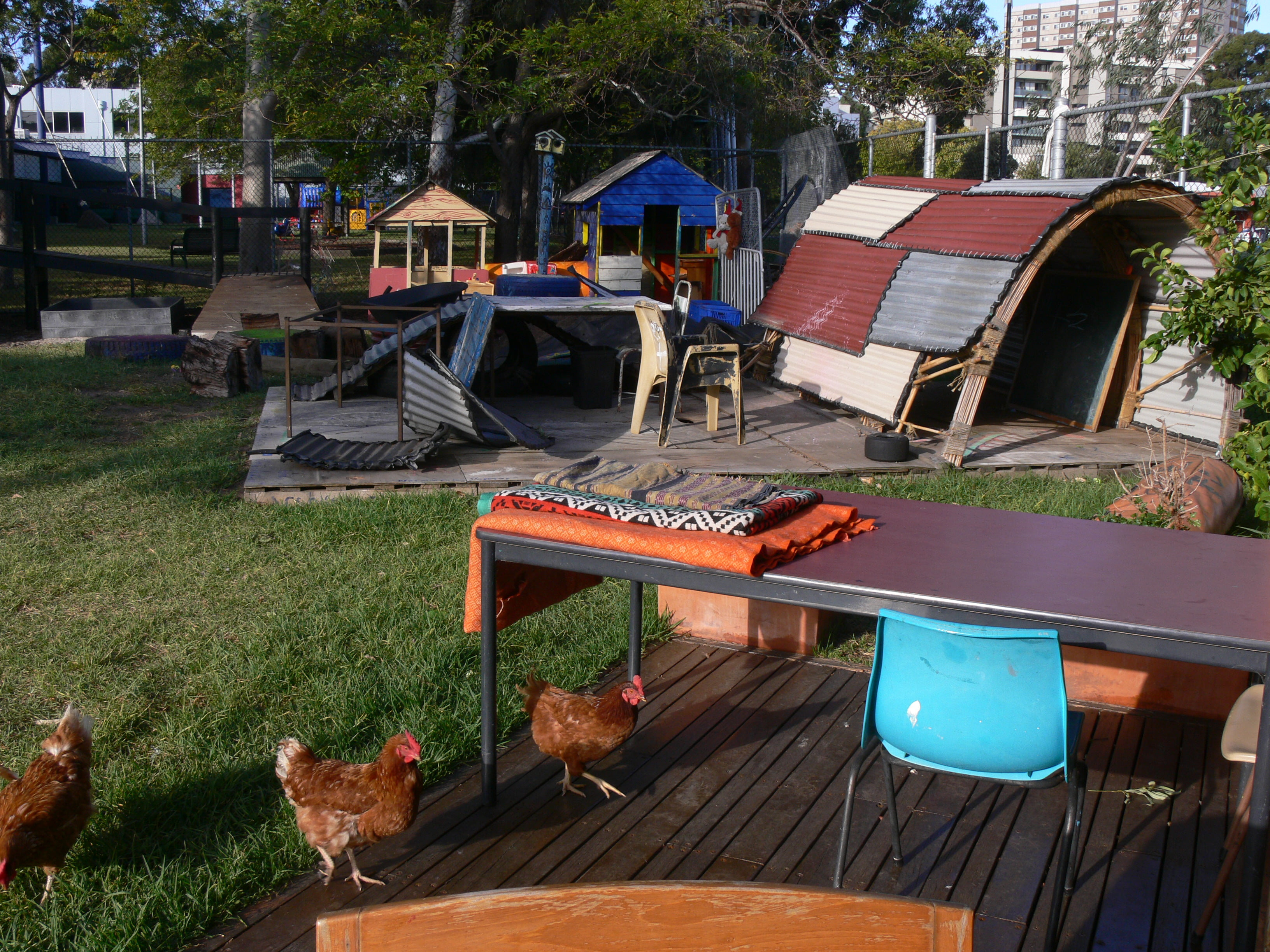 What a great backyard! Chooks and all!
